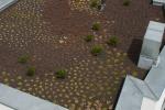 MOSAIC HOUSE_Green Features_garden_zoom