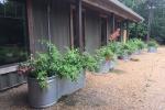 Lodge planters 2