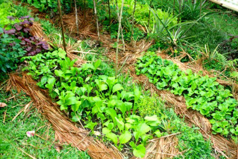 Sustainability Projects | Lodge Sustainable Gardening Methods ...